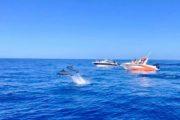 Mauritius dolphin tour